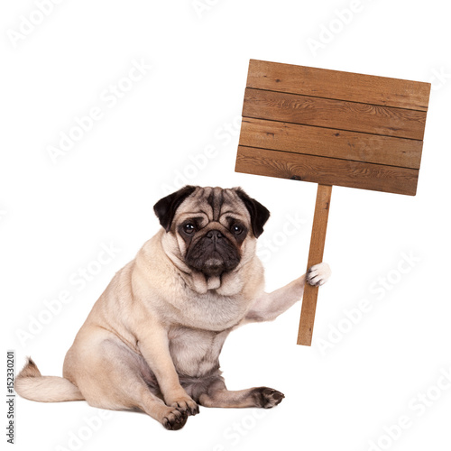 lovely cute pug puppy dog sitting down with blank wooden sign on pole, isolated Poster