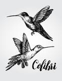 Two flying colibri birds. Hand drawn Vector illustration. - 152345009