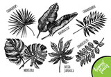 Ink hand drawn set of tropical plants leaves - Banana palm leaves, monstera, chamaedorea, chamaerops, zamioculcas, fatsia japonica. Botanical elements collection for design, Vector illustration. - 152347624