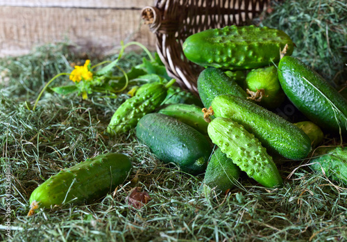 Fresh green cucumbers with leaf