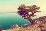 Tree on the rock above the sea. Summer landscape.