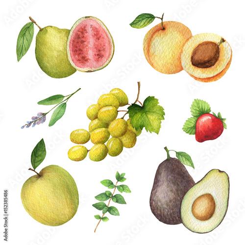 akwarela-organicznie-set-owoc-i-ziele-odizolowywajacy-na-bialym-tle