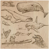 Cetaceans, Cetacea - An hand drawn pack, vector sketching - 152400276