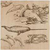 Cetaceans, Cetacea - An hand drawn vector pack, collection - 152400464