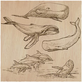 Cetaceans, Cetace - An hand drawn pack, vector sketching - 152400619