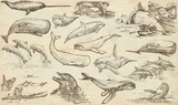 Cetaceans, Cetacea - An hand drawn pack, freehand sketching - full sized collection on od paper. - 152400811