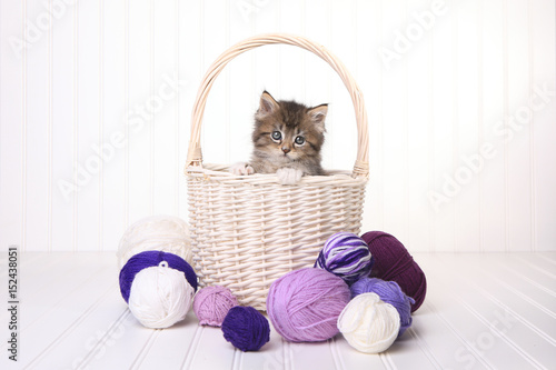Poster Cute Kitten in a Basket With Yarn on White