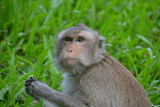 Ein Affe im Wald