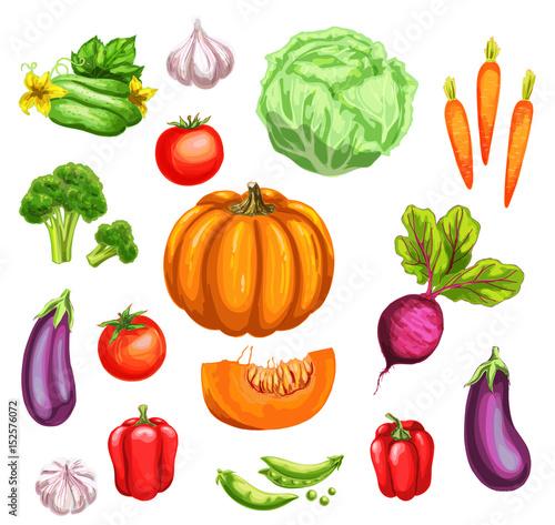 Vegetable watercolor set of fresh organic veggies