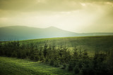 A beautiful field scenery of Slovakia. Warm summer haze, colorful contrast look.
