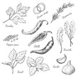 Set of spices in sketch style