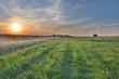 Summer meadow sunset
