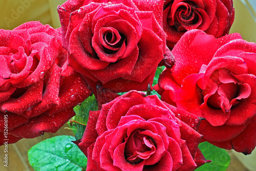 Staande foto Roses Red roses. Background of red roses.