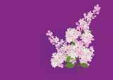 Lilac flower purple color watercolor brush design hand drawn