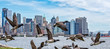 goose flying over manhattan new york city landscape background