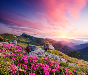 Summer landscape with flowers in the mountains © Oleksandr Kotenko