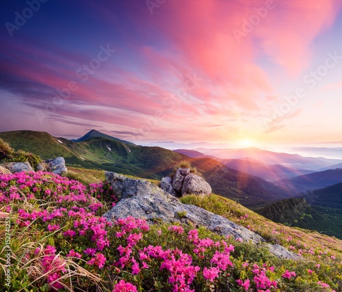 Aluminium Zomer Summer landscape with flowers in the mountains
