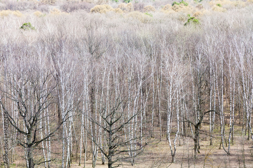view of bare birch and oak trees in spring