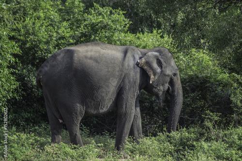 Poster Sri Lanka Yala National Park