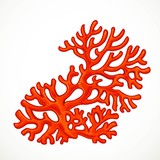 Red asymmetric corals marine life object isolated on white background
