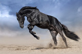 Black horse stallion play and jump in desert dust - 152951206
