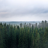 Landscape with grey weather and forest from hill at autumn day