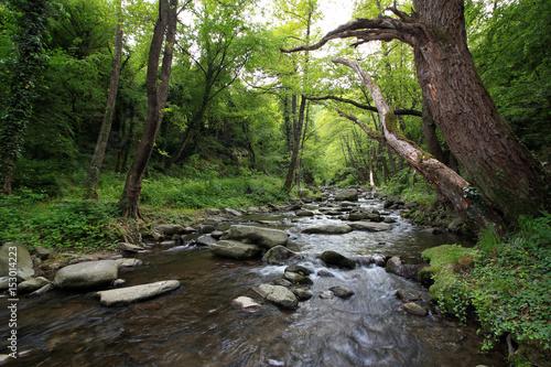 Tamrash river, Rhodope mountain, Bulgaria. Poster