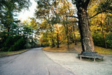 Road in the park with a bench