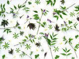 Green leaves and purple flowers isolated on white background. Pattern of leaves. Floral background. - 153104274