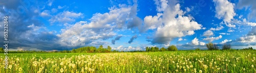 Spring meadow panorama, full of dandelions - 153232846