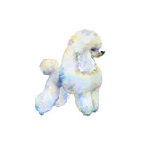 Watercolor white puddle with grooming. Hand drawn dog portrait. Painting isolated pet illustration on white background