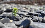 Green plant among sea stones