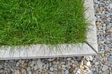 Rasen, grünes Gras, Gras