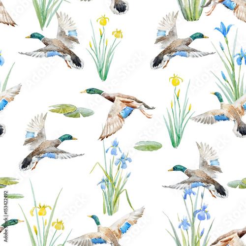 Fototapeta Watercolor pattern with ducks