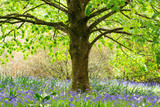Beautiful bluebells in blossom in the park, England, selective focus