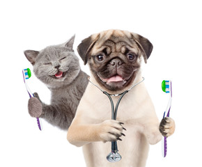 Pug puppy with stethoscope on his neck and happy kitten holding a toothbrushes. isolated on white background