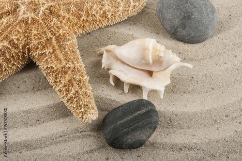 Poster Stenen in het Zand Stones in the sand