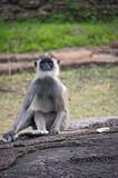 Monkeys in freedom