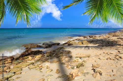 Caribbean island and Palm leaves .