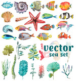 Fototapety Watercolor Sea Life, Seaweed, Shell, fish, sea horse, beautiful collection for design