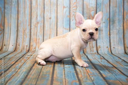 Deurstickers Franse bulldog French Bulldog on blue wooden background