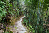 Hiking through a bamboo forest