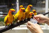 The parrots colorful