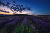 Lavender field at sunset - 153745486