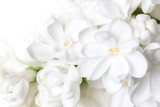 White lilac flowers blossom wallpaper . Floral motif background. - 153808029