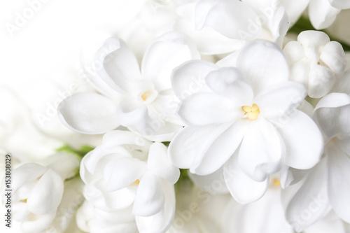 biale-kwiaty