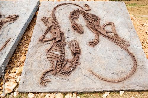 Model Dinosaur fossil Poster