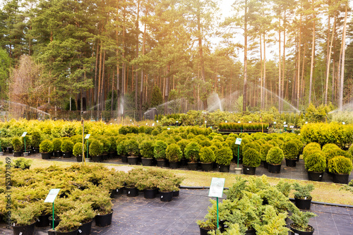plants and trees at outdoor plant nursery