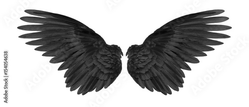 black wings on white background - 154054638
