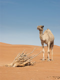 camel standing in front of dry tree trunk